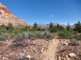 Trail To Pine Creek