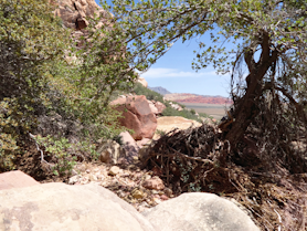 Looking at Calico Hills