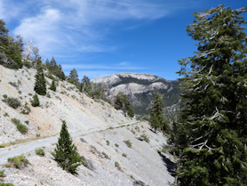 Lower Bristlecone Trail
